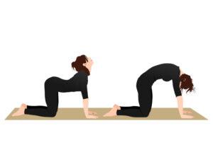 Cat-cow yoga stretch for arthritis